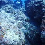 ウミガメお休み中。石垣島の海底にて