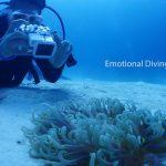 竹富島の海底でくまのみ撮影中。