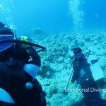 体験ダイビングで見た、石垣島の海に居たアオウミガメとコバンザメ。