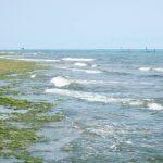 お昼休みの竹富島アイヤル海岸付近。アーサーの時期。