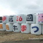 黒島ウシ祭り
