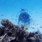 石垣島の海の底、体験ダイビングで。