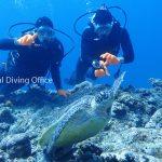 アオウミガメ。体験ダイビング、黒島にて。