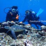 体験ダイビングでウミガメと出会う。