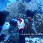 体験ダイビングにて、ハマクマノミ撮影中。