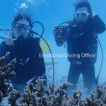 石垣島で体験ダイビング。冬でも潜れます!