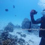 体験ダイビングで観察中。