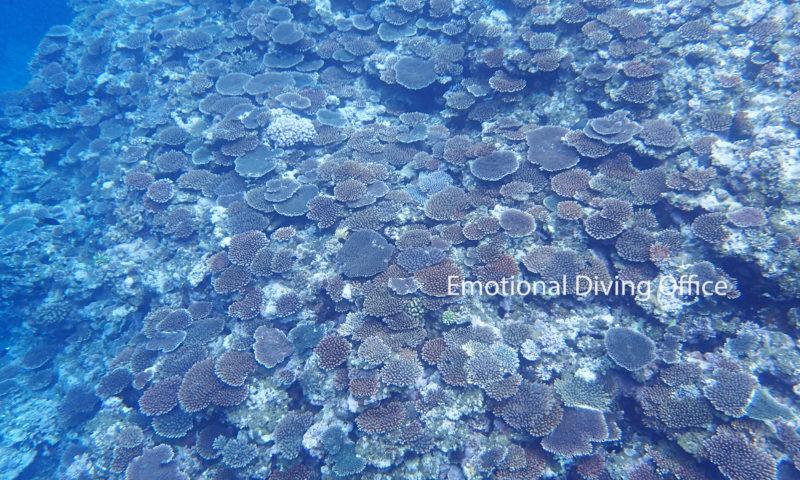 地球の色、サンゴの色。