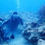 お休み中のアオウミガメと記念撮影、体験ダイビング。