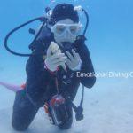 砂の中からリュウキュウタケ貝。竹富島の海底にて。