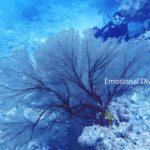 大きなウミウチワ。サンゴの仲間。