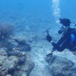アオウミガメと体験ダイバー、石垣島の海底にて。