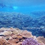石垣島崎枝のサンゴ礁。