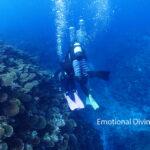 石垣島のサンゴの海をすいすいと。