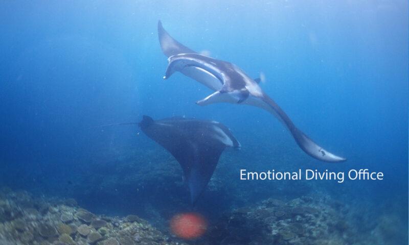 マンタ。体験ダイビングにて。