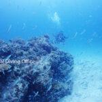 竹富島海底のテンジクダイ